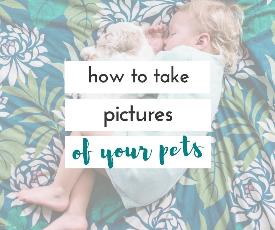 are your pets a part of your family? here are 5 secrets for taking better pet pictures