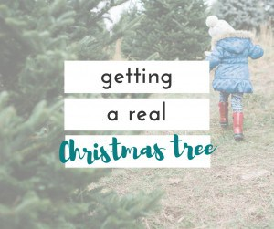 We always get a real Christmas tree because we love them, and it is a great family tradition.