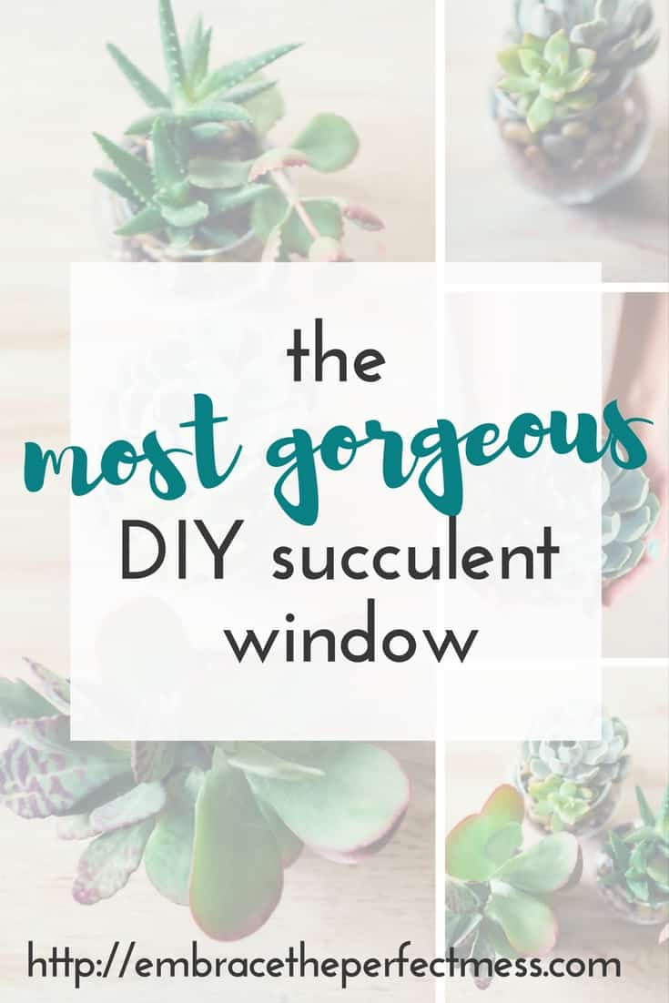 I am so happy I figured out a place to put my succulents. This diy succulent window adds so much to my kitchen.