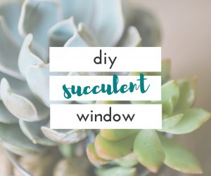 I am so happy I figured out a place to put my succulents. This succulent window adds so much to my kitchen.